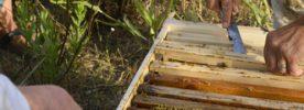 Déclarer des ruches